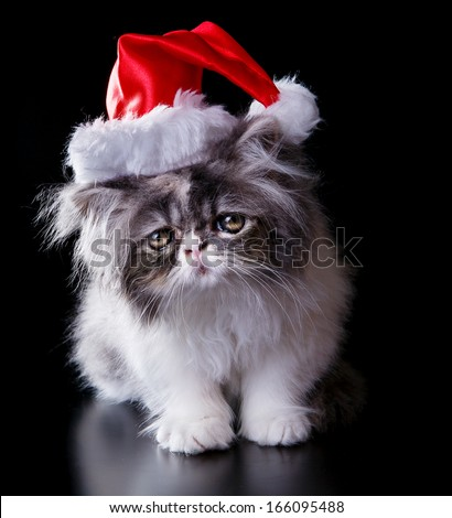 Wonderful persian cat with Santa Claus hat, perfect for illustrating Christmas. On black background. - stock photo