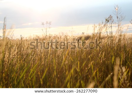 wonderful sight on the yellow grasses contour to the sun