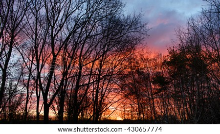 Wonderful sunrise on the background of silhouettes of trees - stock photo