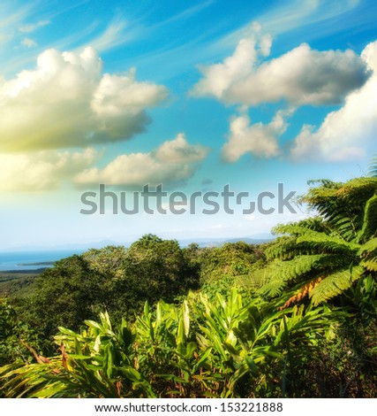 Wonderful trees and vegetation of Queensland, Australia. - stock photo