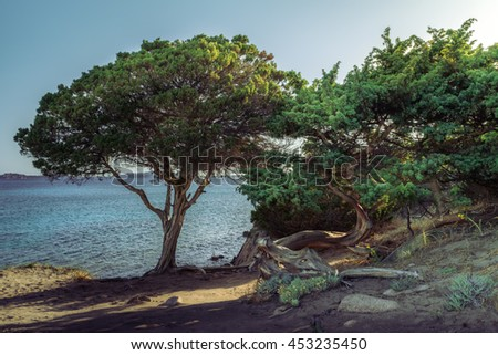 Wonderful trees at the sea