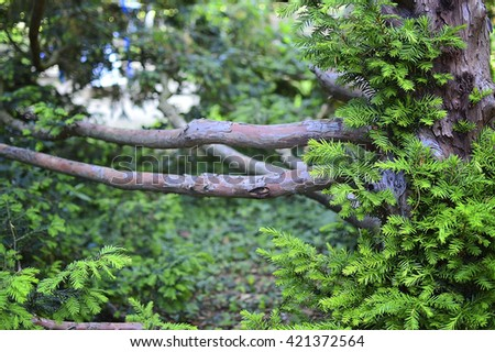 wood and green branches