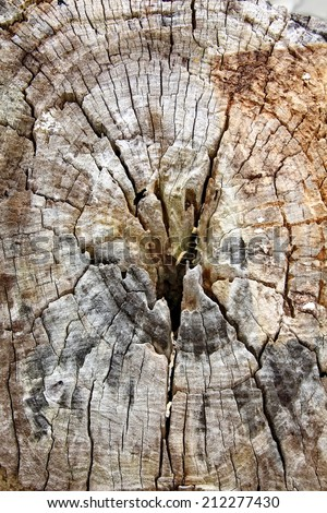 Wood background . Tree stump texture background - stock photo