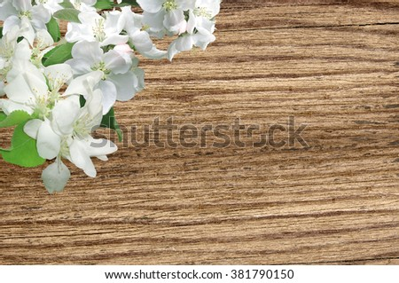Wood background with spring flowers. Apple Blossom