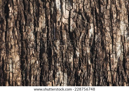 Wood bark - stock photo