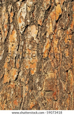 wood bark texture - stock photo