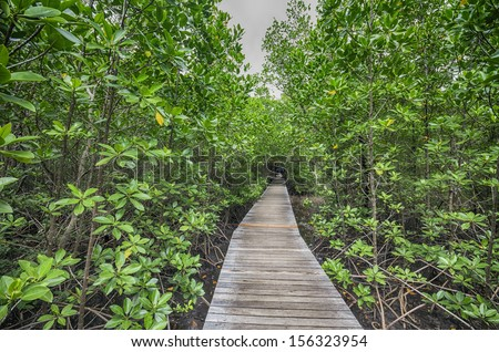 Wood Boardwalks mangrove forest - stock photo