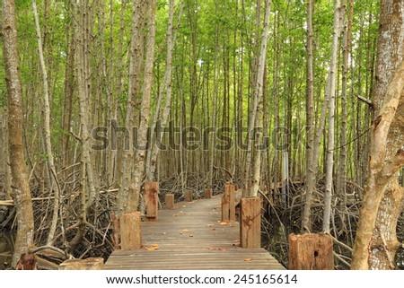 wood bridge and mangrove forest - stock photo