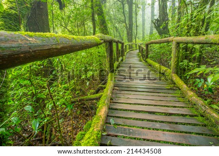 Wood bridge with moss in natural park Thailand - stock photo