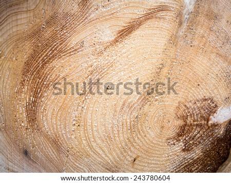 Wood closeup - stock photo