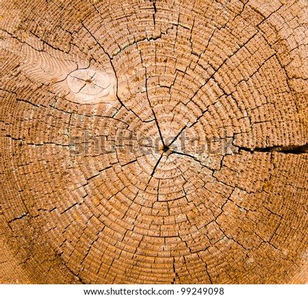 Wood core structure background - stock photo