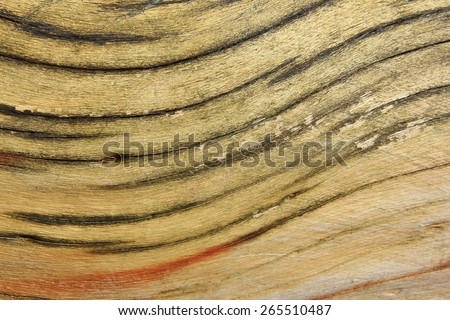 Wood Curve and Color - Natural Backgrounds - Patterns and Textures in Abstract Beauty