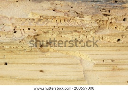Wood damaged by woodworm  - stock photo