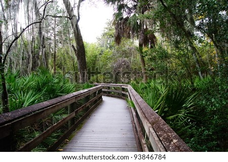Wood dock trail through the forest - stock photo