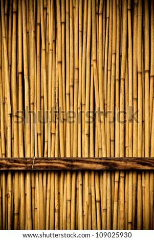 Wood door background - stock photo