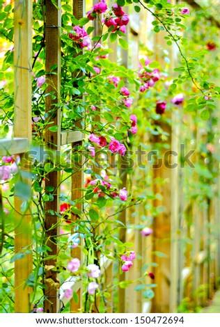 Wood fence flowers - stock photo