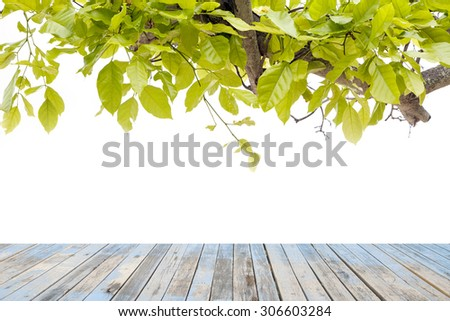 Wood floor on Beautiful Green leaves on white background - stock photo