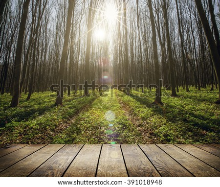 wood floor on the backgrounds spring forest  - stock photo