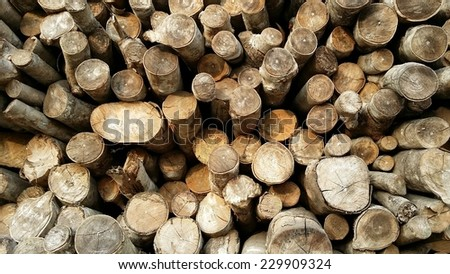 wood for charcoal from mangrove tree - stock photo