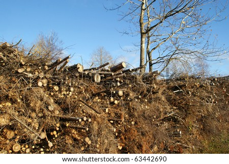 Wood for Fuel and Energy - stock photo