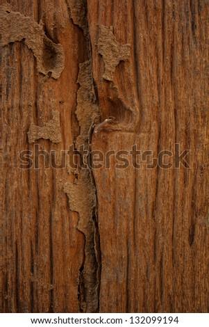 Wood is a beautiful pattern - stock photo