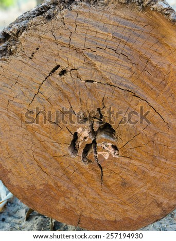 Wood is cut, leaving in the tree - stock photo