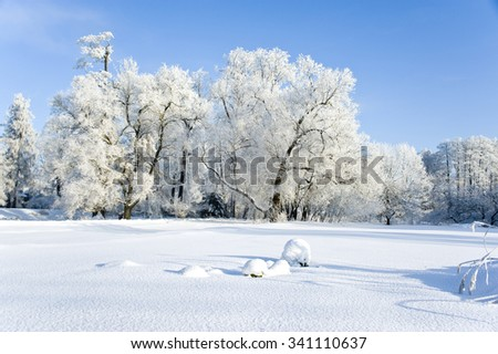 Wood landscape in frosty sunny day in the winter
