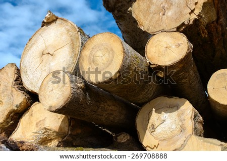 Wood logs on blue sky background - stock photo