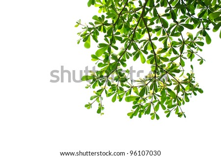Wood make pattern background Green on White background. - stock photo