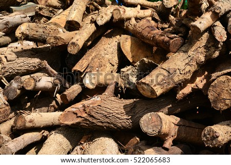 Wood material in forest as abstract composition
