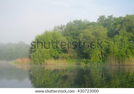Wood on coast of the river, morning, - stock photo