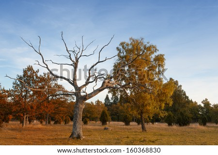 Wood pasture on the island Oeland, Sweden. Wood pasture is a historical European land management system in which open woodland provided shelter and forage for grazing animals. - stock photo