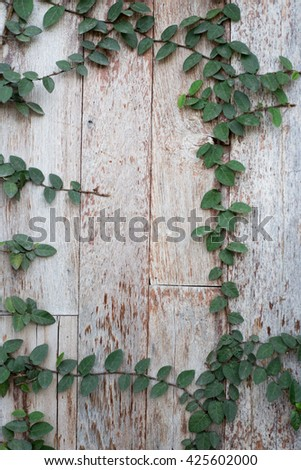 wood plank wall texture with green creeper plant - stock photo