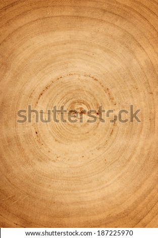 wood rings texture background - stock photo