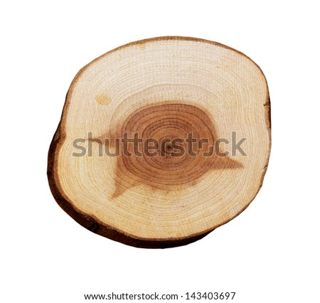 Wood slice on a white background