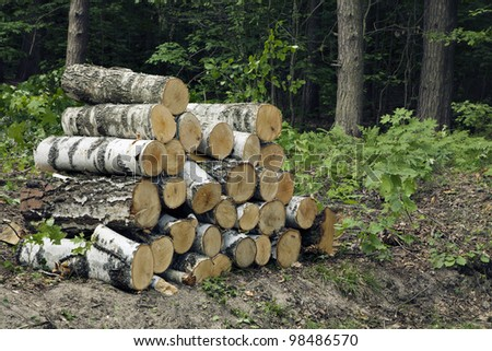 Wood stack in a forest during logging operations