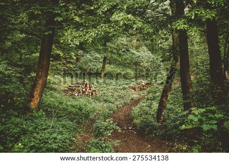 Wood stack on the forest - stock photo