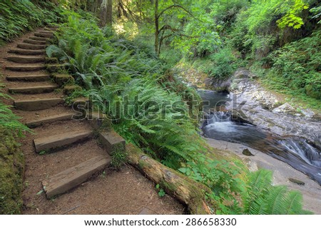 Wood Stair Steps in Sweet Creek Falls Trail Complex with Lush Greenery in Mapleton Oregon during Spring Season - stock photo