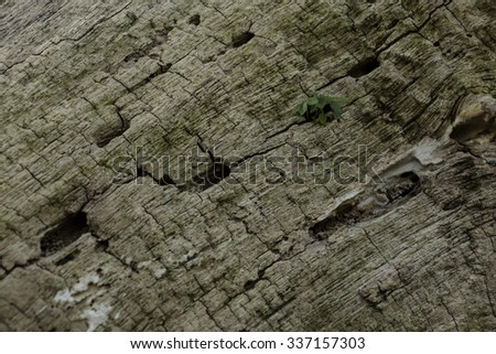 Wood texture and Small trees