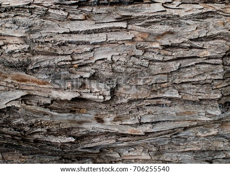 wood texture /close up background