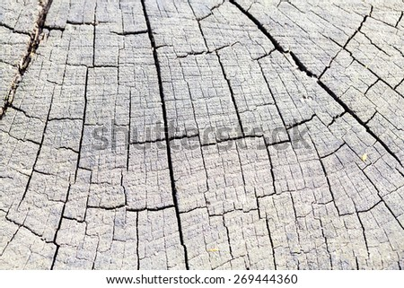 Wood texture from very old, weathered pieces of tree trunks with tree bark - stock photo