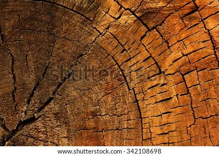 wood texture of cut tree - stock photo