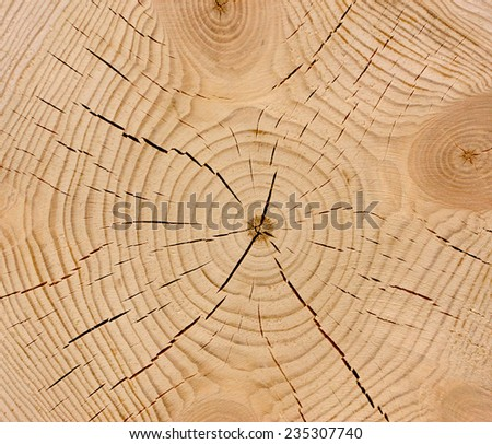 Wood texture of cutted tree trunk, close-up  - stock photo