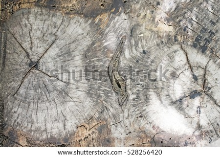 Wood texture of old cut tree trunk