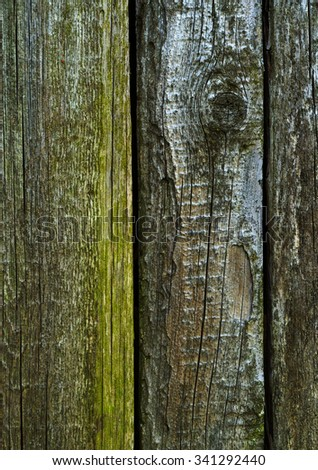 Wood texture - old cracked boards with fungal mold - stock photo