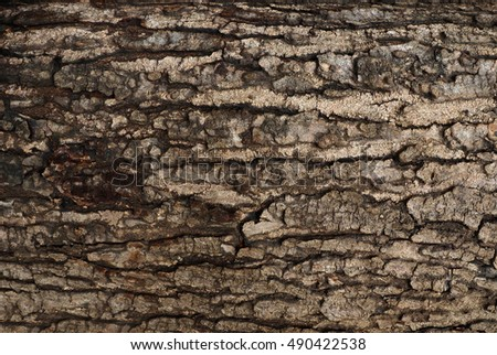 Wood texture, The bark of the tree Still not completely dry.