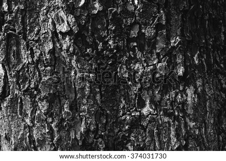 wood texture , three texture, back and white nature background/texture