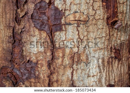 Wood texture (trees from forest).