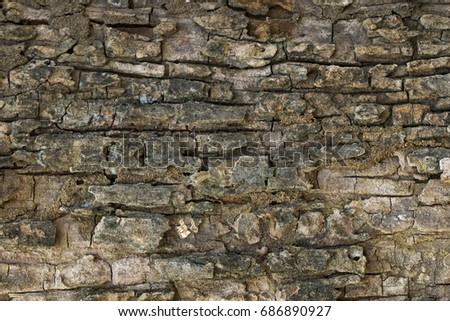 Wood texture with natural patterns, Background old panels, The bark of the tree.