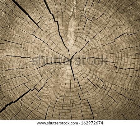 Wood texture. Wood texture. Wood texture. Wood texture. Wood texture. Wood texture. Wood texture. Wood texture. Wood texture. Wood texture. Wood texture. Wood texture. Wood texture. Wood texture. Wood - stock photo